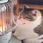 ストーブでまったりする癒し猫 「ぶさお」 彼の過去は壮絶だった!!