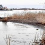 悲報 福井県の川に遺体、不明の3歳児「蓮ちゃん」と断定